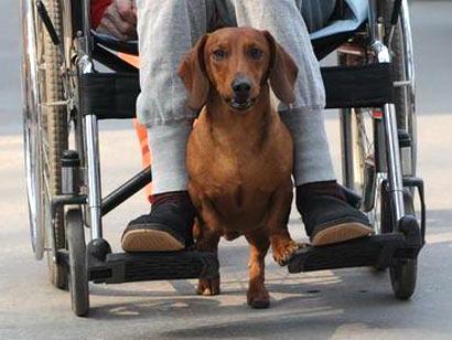 Σκύλος σπρώχνει αναπηρικό καροτσάκι